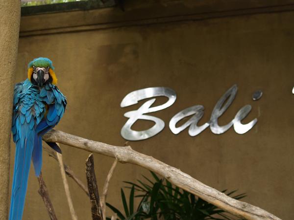 BALI-140
